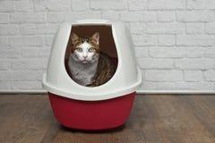 坐在一个红色垃圾箱和看对照相机的逗人喜爱的虎斑猫 库存照片