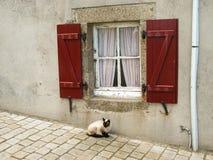 坐在一个红色窗口下的暹罗猫 免版税库存图片