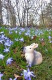坐在一个蓝色开花的草甸的复活节兔子 免版税库存照片