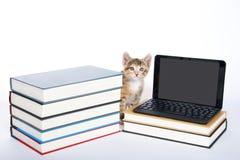 坐在一微型la旁边的母白棉布tortie平纹小猫 免版税图库摄影