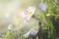坐在一朵硕大雏菊的树荫下的妇女的片刻在一个绿色草甸 库存图片