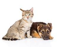 坐在一条哀伤的狗旁边的虎斑猫 背景查出的白色 免版税库存图片