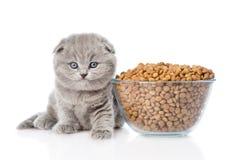 坐在一碗的小猫食物附近 背景查出的白色 免版税库存图片