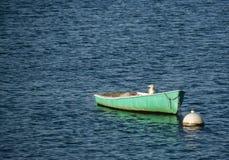 坐在一艘充气救生艇的孤立海鸟海鸥在港口 库存照片