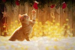 坐在与圣诞节deco的雪的小小猫 免版税库存图片