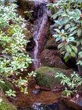 坐在与植物的瀑布下的罗宾 免版税库存照片
