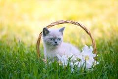 坐在与百合的一个篮子的小猫开花 免版税库存图片