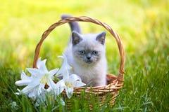 坐在与百合的一个篮子的小猫开花 库存照片