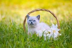 坐在与百合的一个篮子的小猫开花 图库摄影