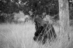 坐在与胳膊的一棵树下的孤独的年轻沮丧的哀伤的妇女在她的面孔前面横渡了 单色纵向 库存图片