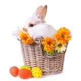 坐在与花的一个篮子的逗人喜爱的空白兔宝宝 库存图片