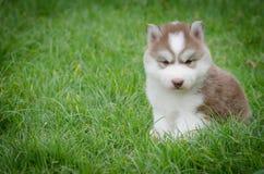 坐在与copyspace的草的小狗 免版税图库摄影