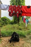 坐在乡间别墅庭院里的幼小黑山羊在加德满都,尼泊尔 免版税库存图片