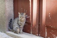 坐在五颜六色的门附近的逗人喜爱的小猫 图库摄影