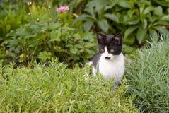 坐在假山庭园的小猫 免版税库存照片