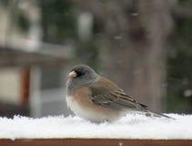 坐在冬天暴风雪的小的鸟 库存照片
