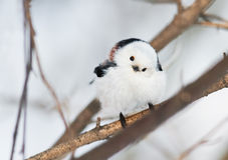 坐在冬天森林里的胖的白色鸟北美山雀 免版税库存图片