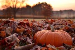 坐在冷淡的叶子的南瓜在黎明 库存照片