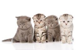 坐在前面的四只小小猫 背景查出的白色 免版税库存照片