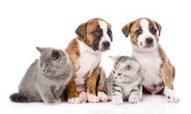 坐在前面的小组猫和狗 在白色 免版税库存图片