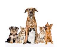 坐在前面的小组猫和狗 查看照相机 免版税库存图片