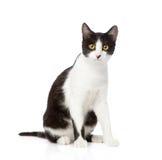 坐在前面的猫 背景查出的白色 库存照片