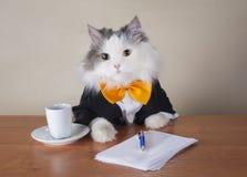 坐在办公室的衣服的猫经理 免版税库存照片