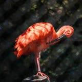 坐在动物园里的紫色火鸟 免版税库存图片