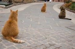 坐在同一个位置的三只棕色猫 库存图片
