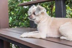 坐在咖啡馆的狗看某事 免版税库存图片