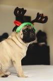 坐在圣诞节服装的哈巴狗 库存照片