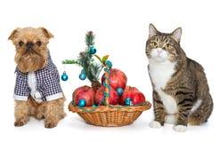 坐在圣诞节篮子附近的狗和猫 免版税图库摄影