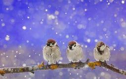 坐在圣诞节诞生的小的滑稽的鸟停放在期间 库存照片