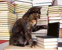 坐在堆的虎斑猫与微型膝部的书前面 免版税库存照片