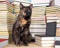 坐在堆的虎斑猫与微型膝部的书前面 图库摄影