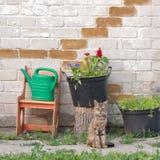 坐在墙壁附近的虎斑猫 图库摄影
