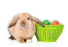 坐在复活节彩蛋附近的兔子 背景查出的白色 免版税库存图片
