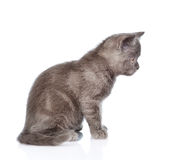 坐在外形的灰色小猫 背景查出的白色 免版税图库摄影