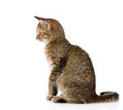坐在外形的猫 背景查出的白色 库存图片