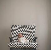 坐在大椅子的逗人喜爱的新出生的婴孩 库存图片