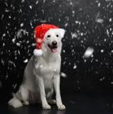坐在大雪下的白色瑞士牧羊犬 免版税库存照片