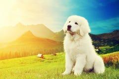坐在山的逗人喜爱的白色小狗 免版税库存图片