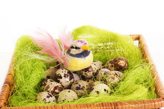 坐在巢的鸟用复活节鹌鹑蛋 免版税库存照片