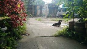 坐在庭院一边的狗 免版税库存图片