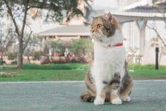 坐在庭院里的一只逗人喜爱的猫 库存照片