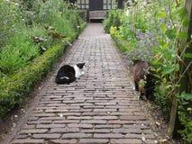 坐在庭院里的两只猫 免版税库存图片