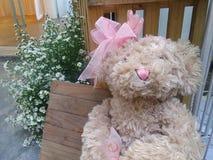 坐在庭院里的甜桃红色华伦泰熊 库存图片