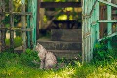 坐在开放农村绿色门附近的安静的猫 图库摄影