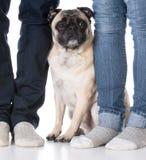 坐在所有者脚的狗 免版税库存照片