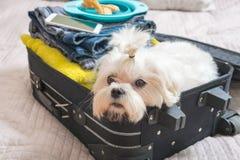 坐在手提箱的狗 免版税库存图片